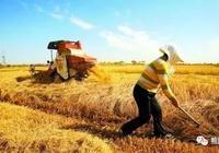 """农民积极性是乡村振兴的""""七寸"""""""